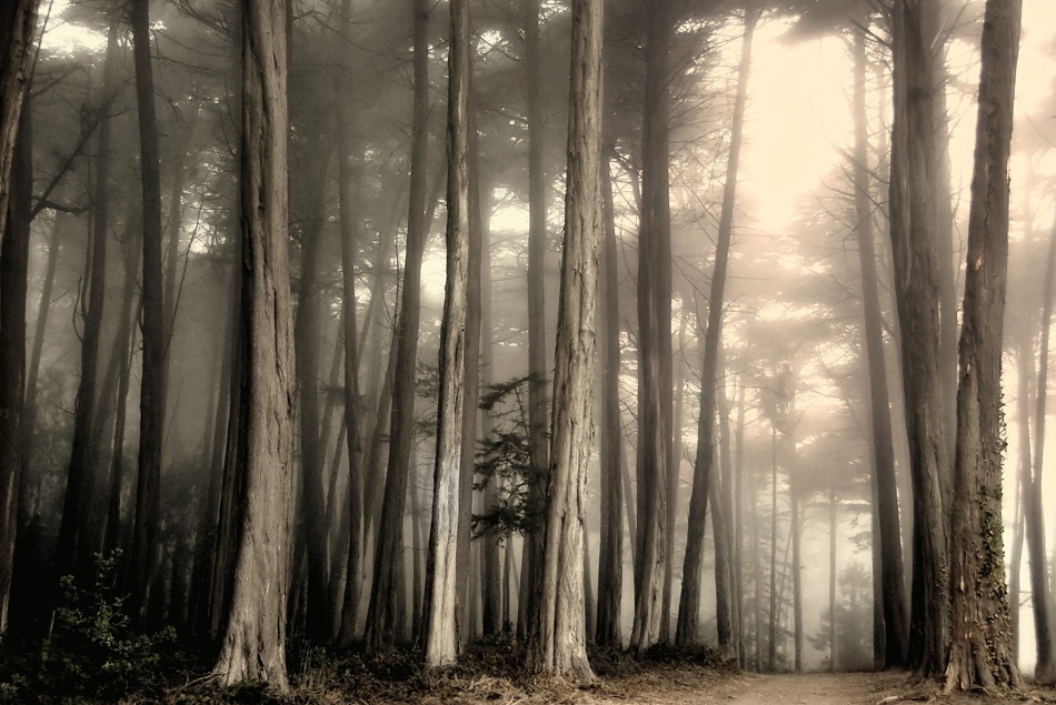 A piece of fine art art photography titled Cypress Trees In Fog by Jody Miller