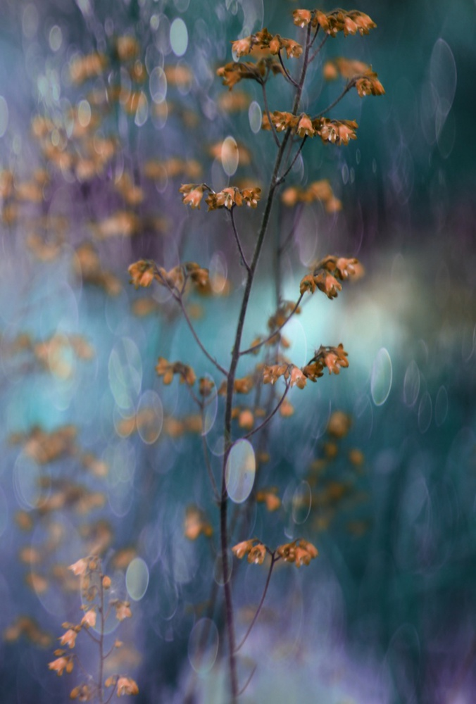 Light Dance with Flowers