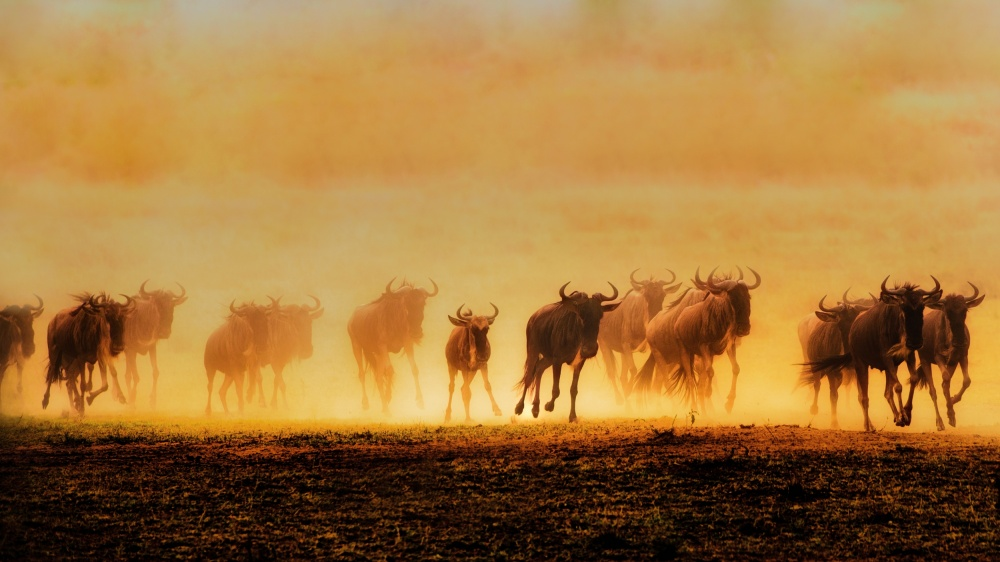 A piece of fine art art photography titled Into Migration by Mohammed Alnaser