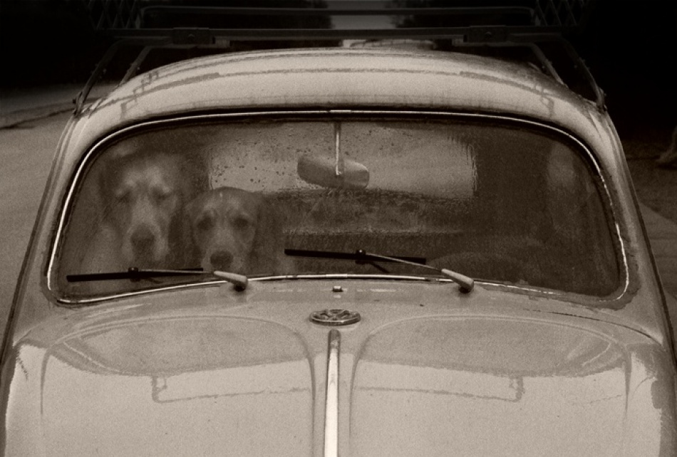 A piece of fine art art photography titled Dogs Stuck In a VW by Helle