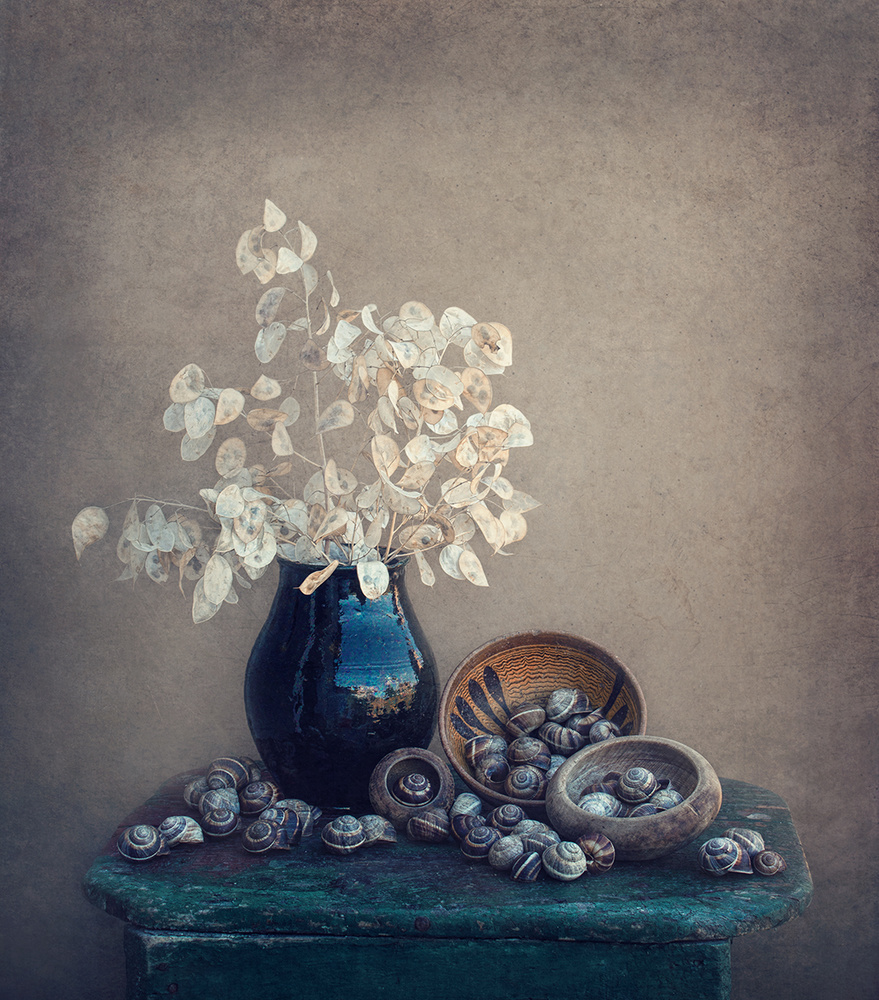 A piece of fine art art photography titled Still Life With a Lunaria and Snails by Dimitar Lazarov - Dim