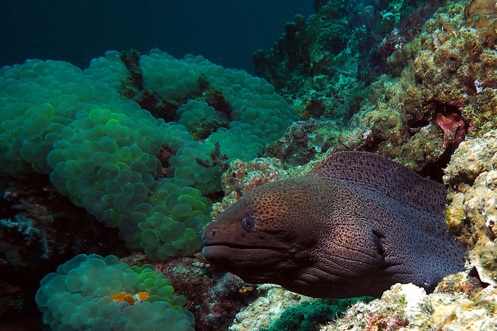 View this piece of fine art photography titled Morray Eel by Schuh