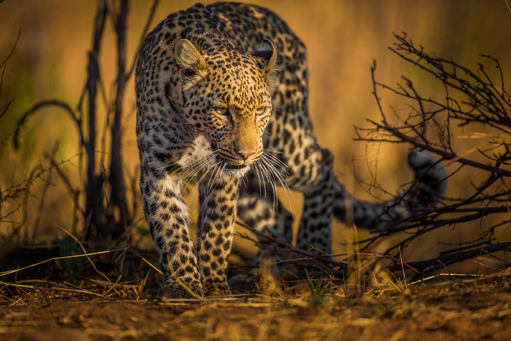 A piece of fine art art photography titled Into the Light by Rudi van den Heever