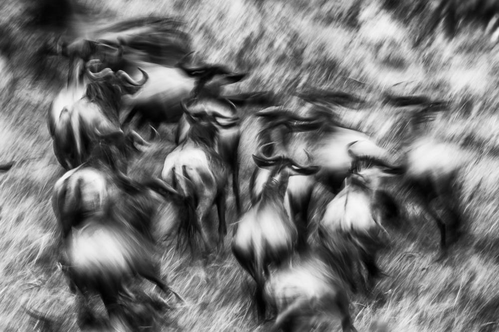 A piece of fine art art photography titled Wild Run by Mohammed Alnaser