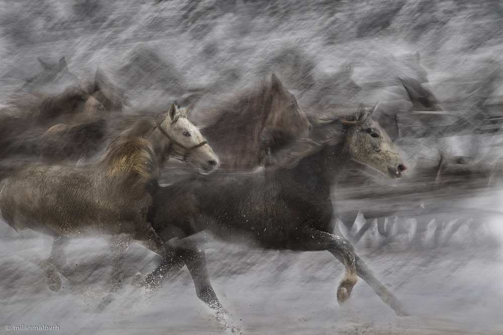View this piece of fine art photography titled Winter Joy by milan malovrh