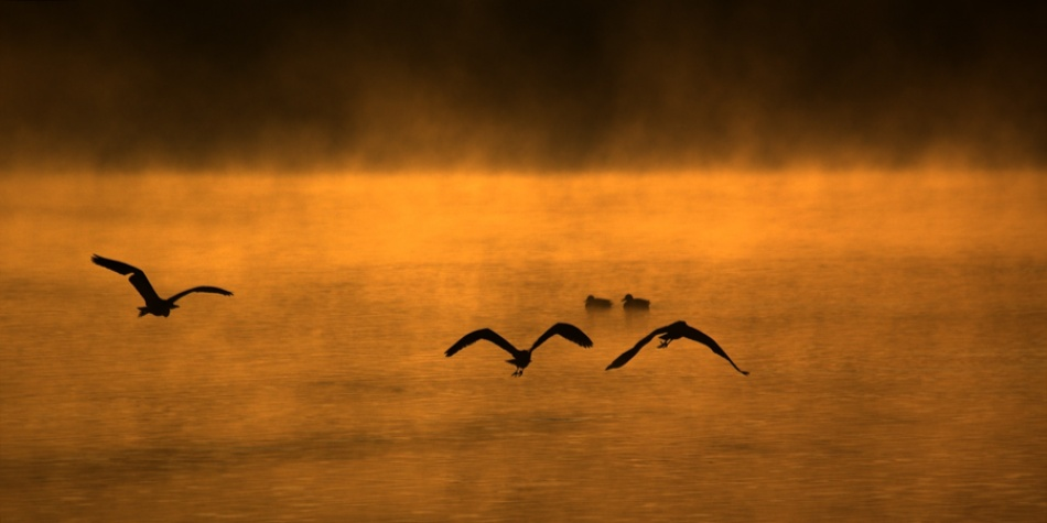 A piece of fine art art photography titled Three Herons,  Two Ducks, One Lake  by Dare Turnsek