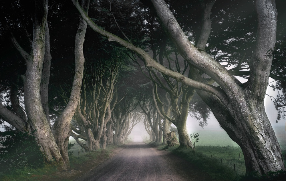 A piece of fine art art photography titled The King's Road by Paul