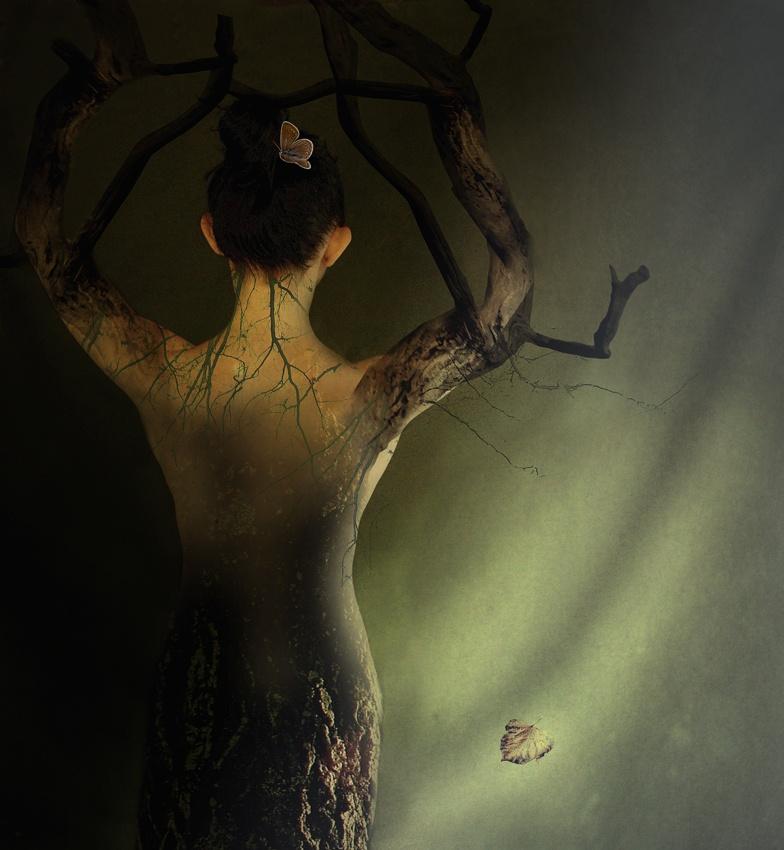 i\'m just a tree
