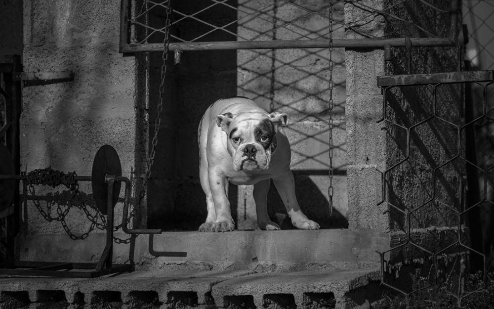 A piece of fine art art photography titled Waiting by Uroš Lunja