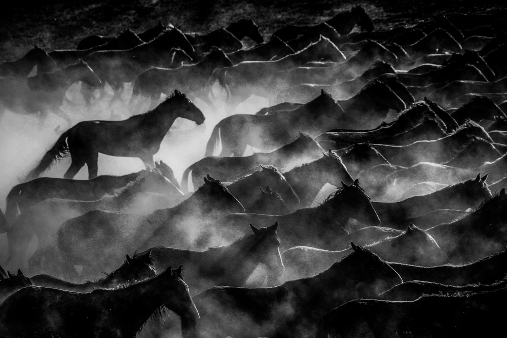 A piece of fine art art photography titled Horses by Ummu Nisan Kandilcioglu