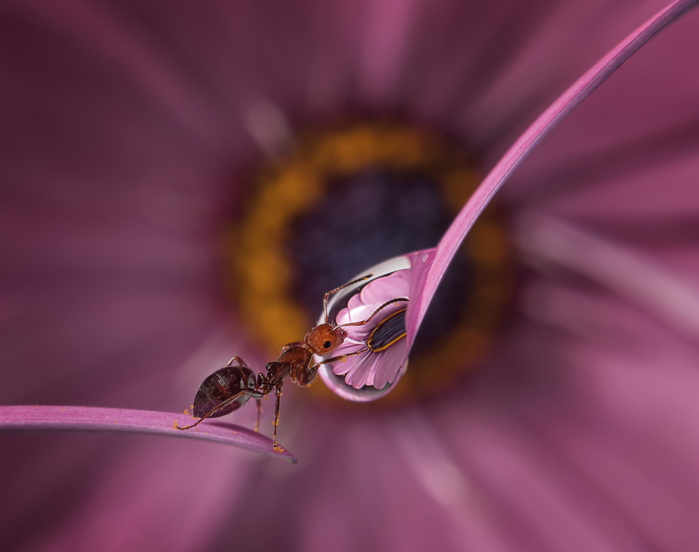 A piece of fine art art photography titled Microworld by Stefano Moschini