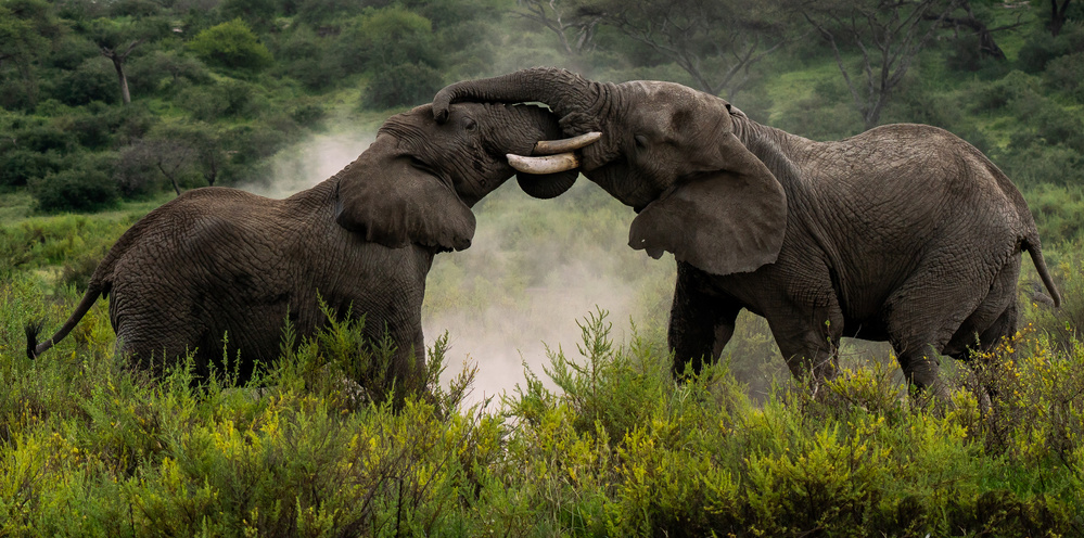 View this piece of fine art photography titled Pachydermal Pleasures by Xavier Ortega
