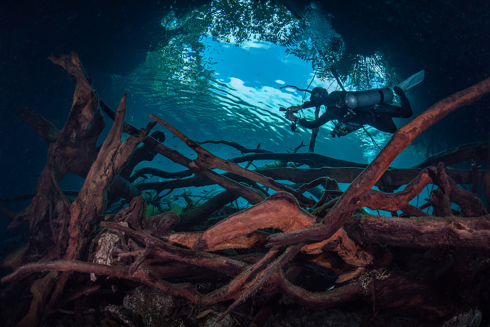 View this piece of fine art photography titled Over the Roots by Serge Melesan