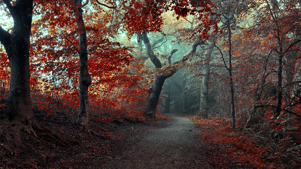 A piece of fine art art photography titled The RED Forest by Leif Løndal
