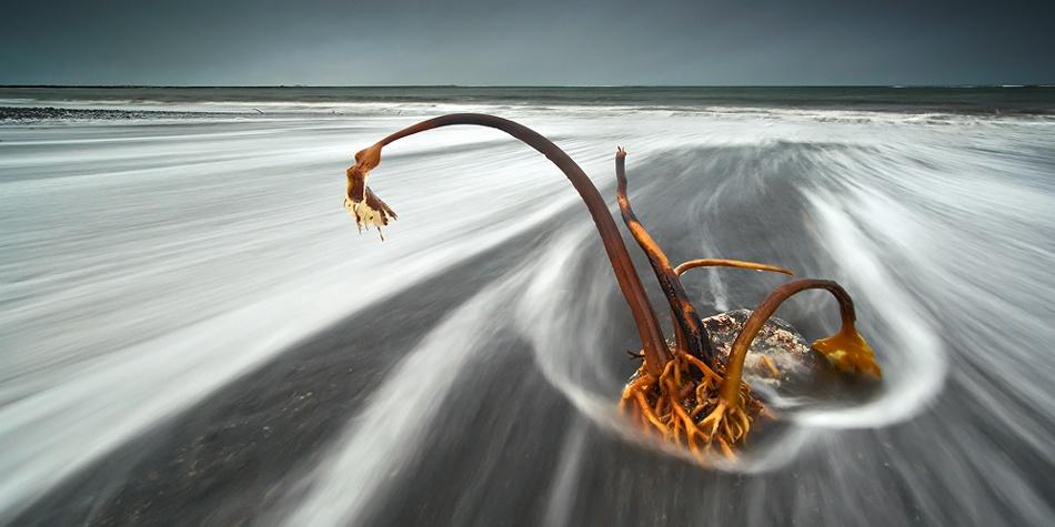 A piece of fine art art photography titled Caught by Raymond Hoffmann