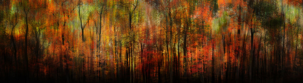 A piece of fine art art photography titled Whispering Woods by BethAnne Lutz
