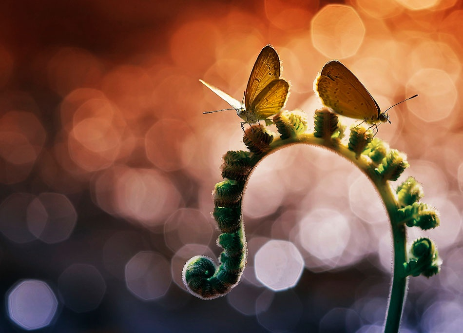 A piece of fine art art photography titled Scatter  Wings by Made Saputra