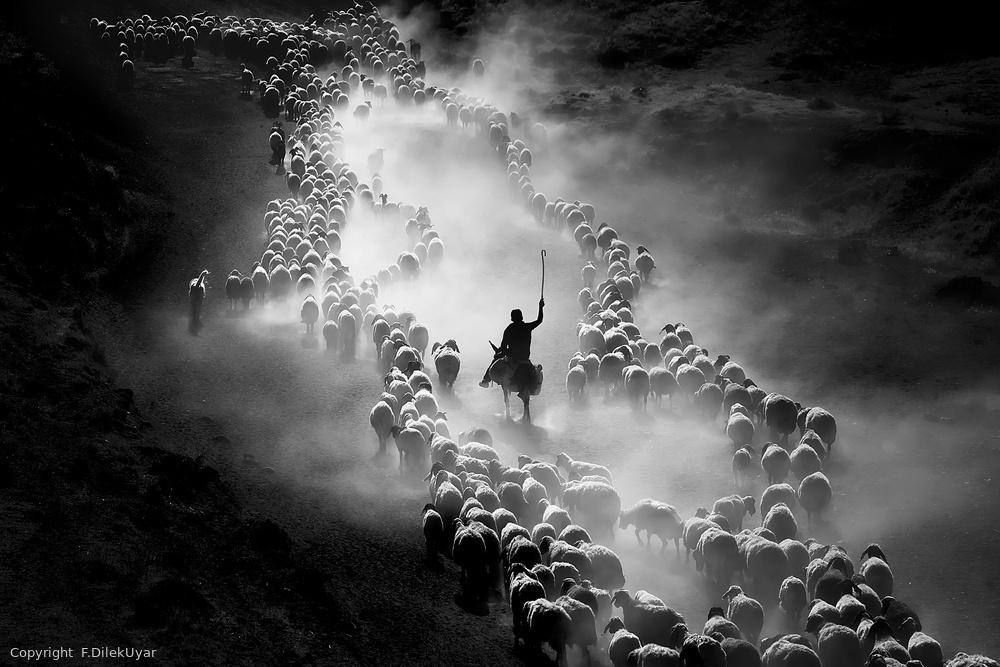 dusty journey