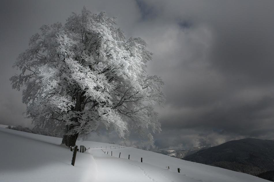 A piece of fine art art photography titled Schneeweg by Nicolas Schumacher