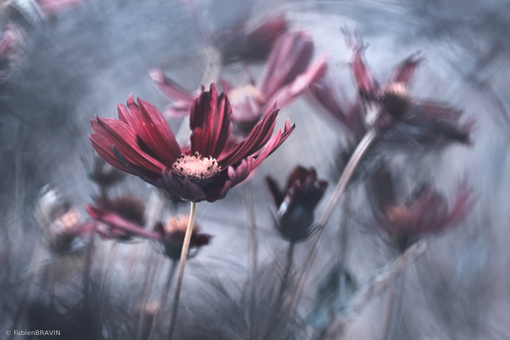 View this piece of fine art photography titled Cosmos painting by Thierry Dufour