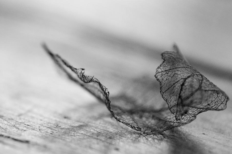 A piece of fine art art photography titled Leave by Paul van Geldrop