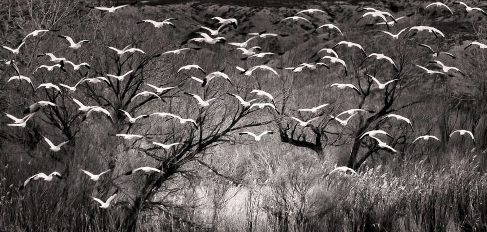 A piece of fine art art photography titled Escape to the Light by John Fan