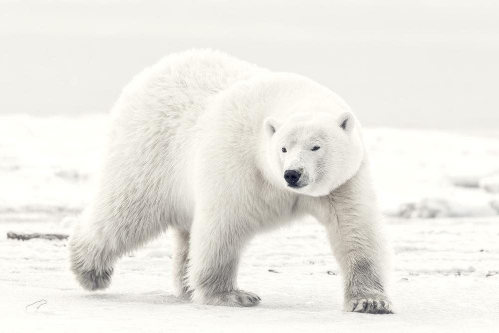 Alaskan king