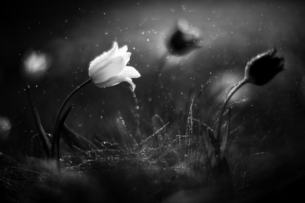 Steppe flower