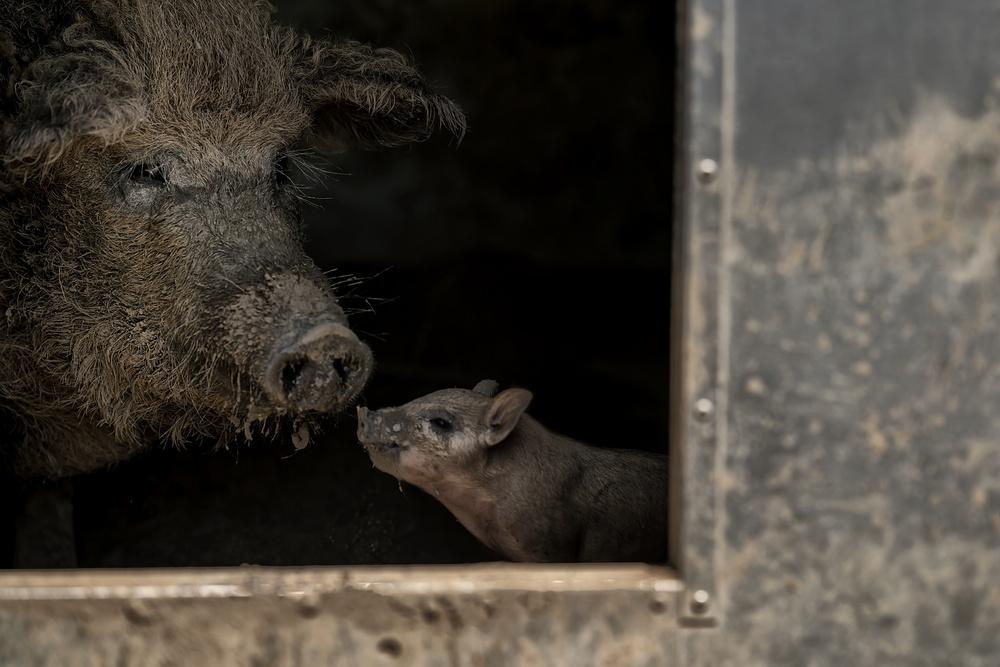 A piece of fine art art photography titled Now, Listen Up, Little Brat by Gert van den Bosch