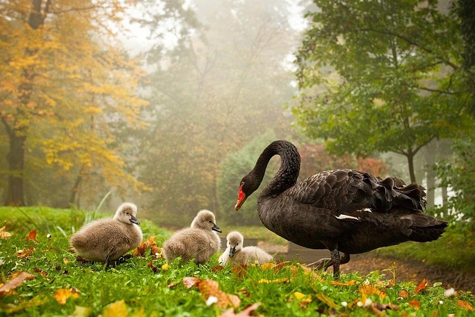 A piece of fine art art photography titled Family by Robert Adamec
