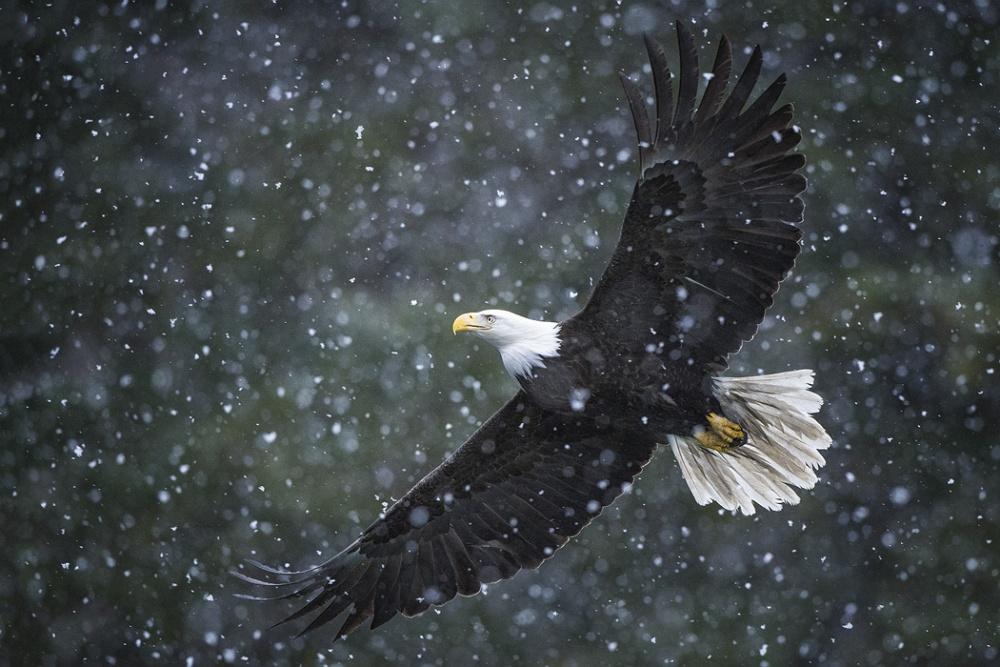 A piece of fine art art photography titled Snow Flight by Dennis Binda