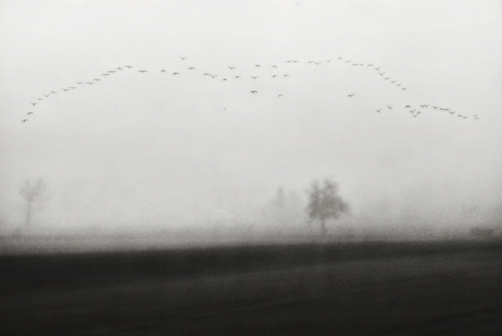 A piece of fine art art photography titled Late Visitors by nicoleta gabor