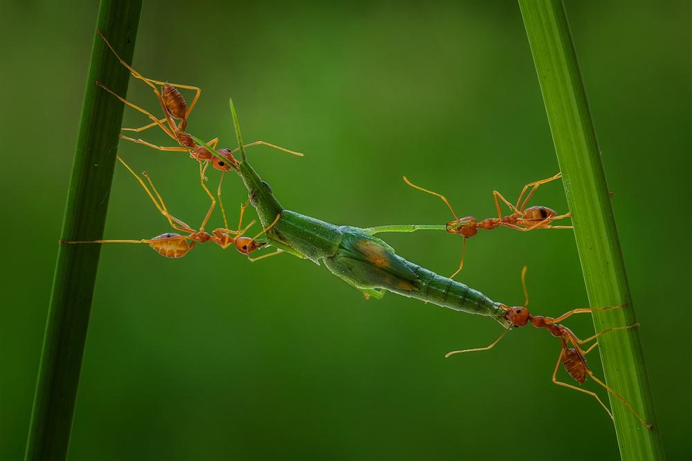 A piece of fine art art photography titled Mutual Cooperation by Yusri Harisandi
