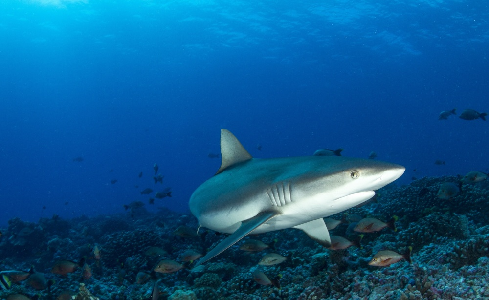 A piece of fine art art photography titled Save Sharks by Paul Cangemi