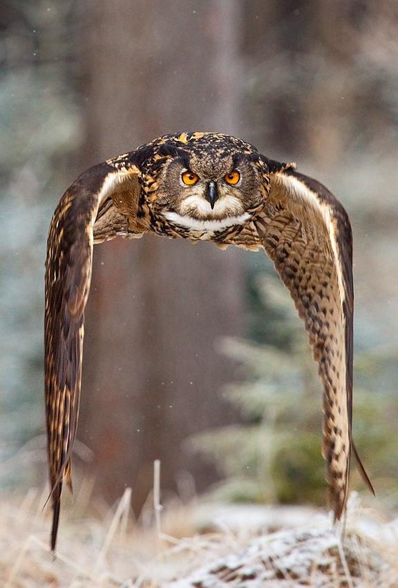 A piece of fine art art photography titled Eagle Owl by Robert Adamec