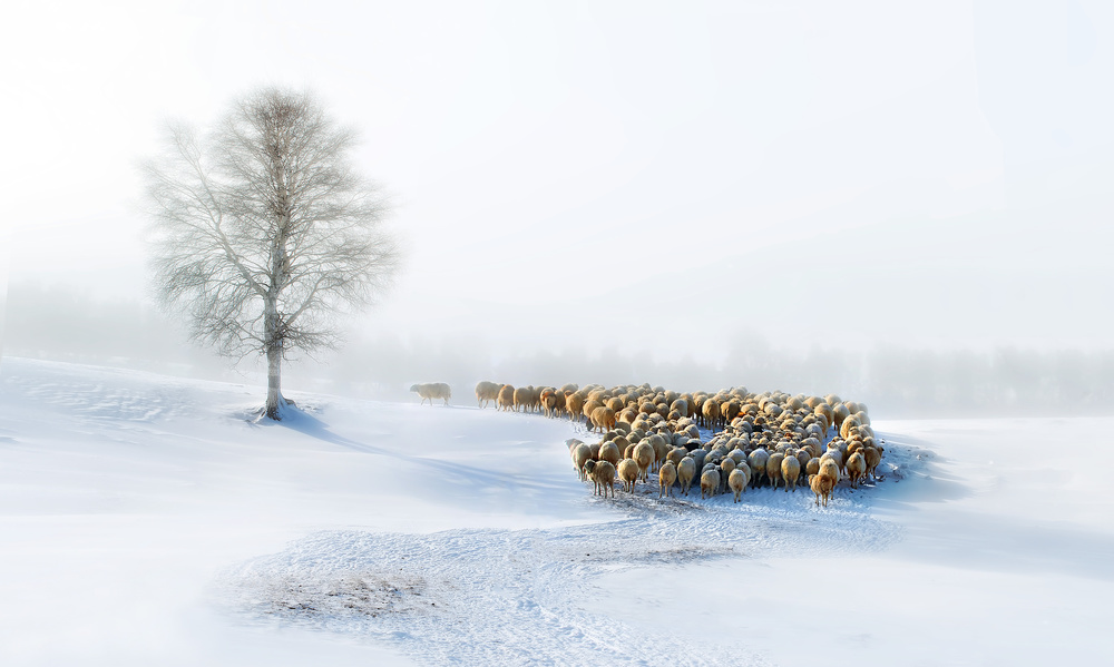 A piece of fine art art photography titled In Snow by Hua Zhu