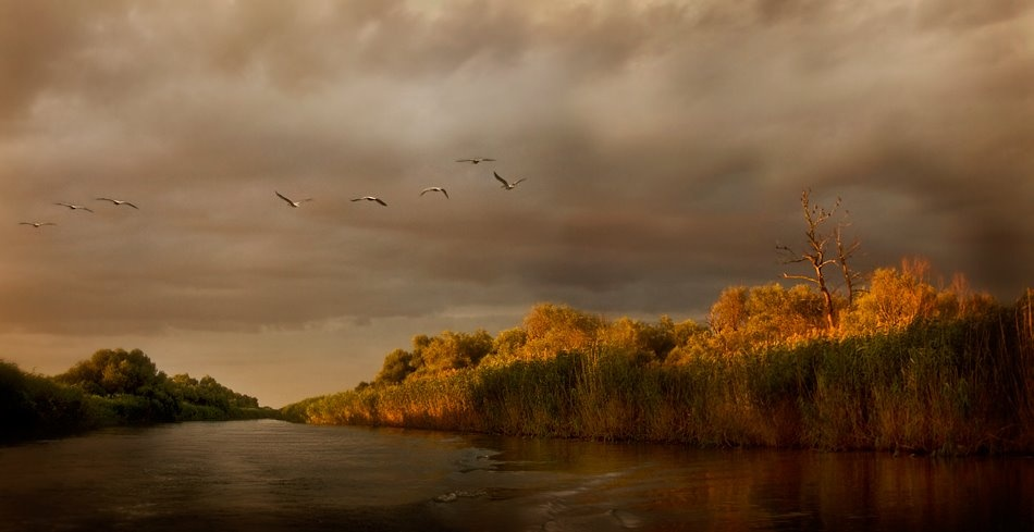 A piece of fine art art photography titled Danube Delta by Ileana Bosogea-Tudor