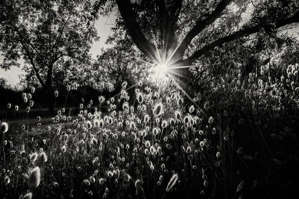 A piece of fine art art photography titled Hello Sunshine by Münire Kulaksiz