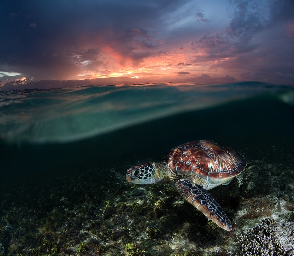A piece of fine art art photography titled Sunset Swim by Andrey Narchuk