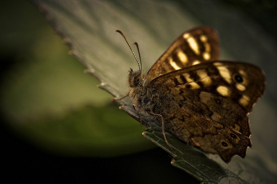 A piece of fine art art photography titled By the Light of Butterfly by Cath Schneider