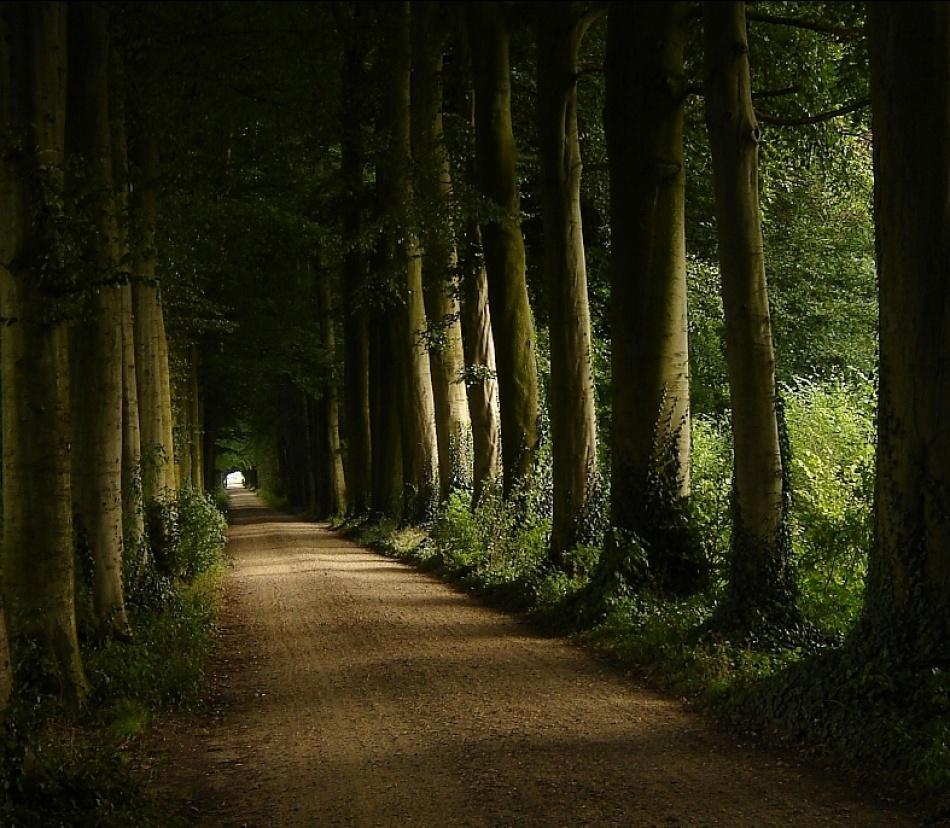 A piece of fine art art photography titled Lovely Old Lane by Arjan Noordman