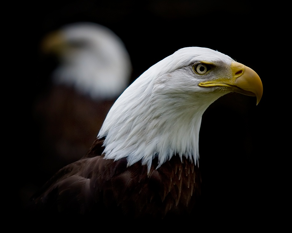 A piece of fine art art photography titled Double Eagles by Sharr