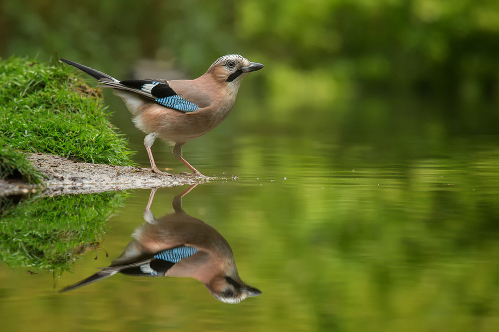 A piece of fine art art photography titled Mirror Mirror by Peter Reijners