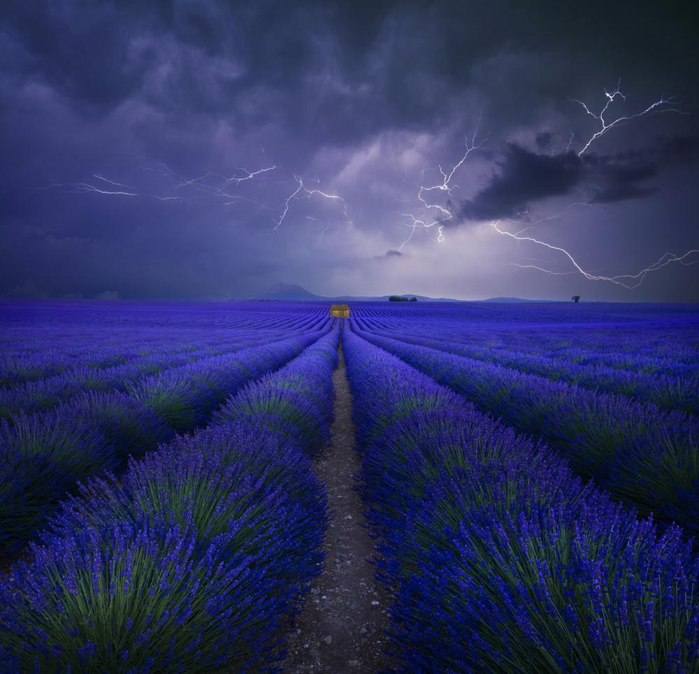 Wetter im Lavendelfeld