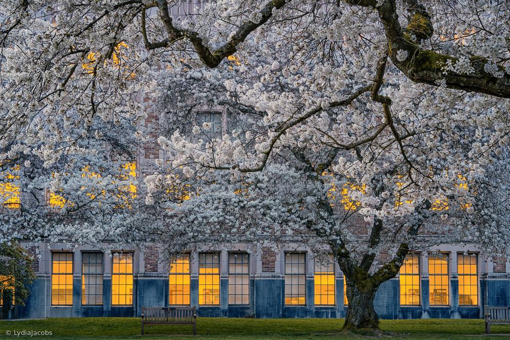 Morning at University of Washington