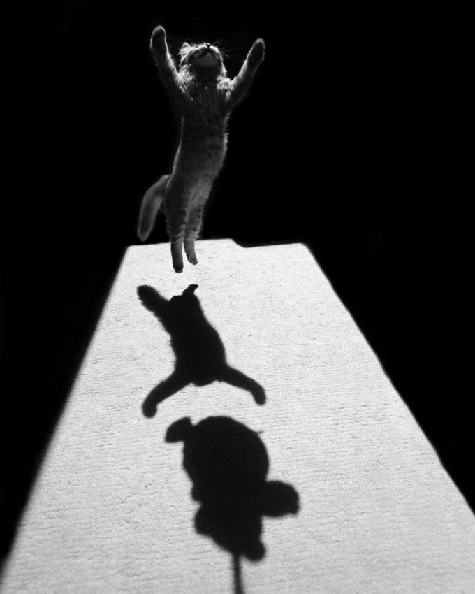 A piece of fine art art photography titled Edgar the Great by Jure Kravanja