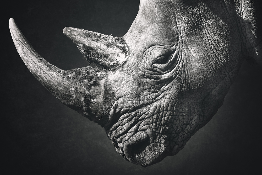 A piece of fine art art photography titled Focused Animals I by Andreas Paehge
