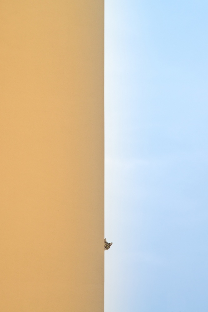 A piece of fine art art photography titled Curiosity Killed the Cat by Graziano Racchelli