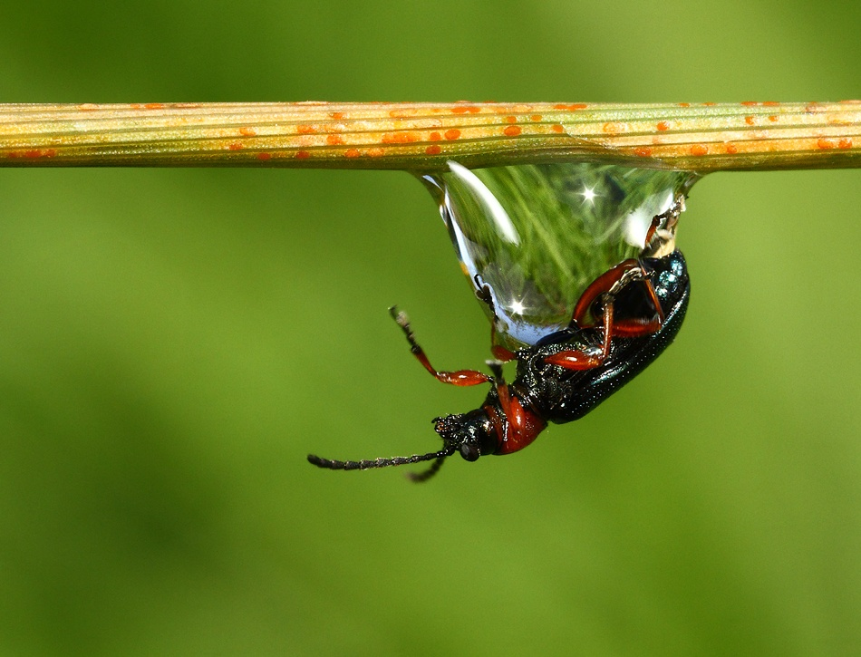 A piece of fine art art photography titled Drop by Vic. Parsons.