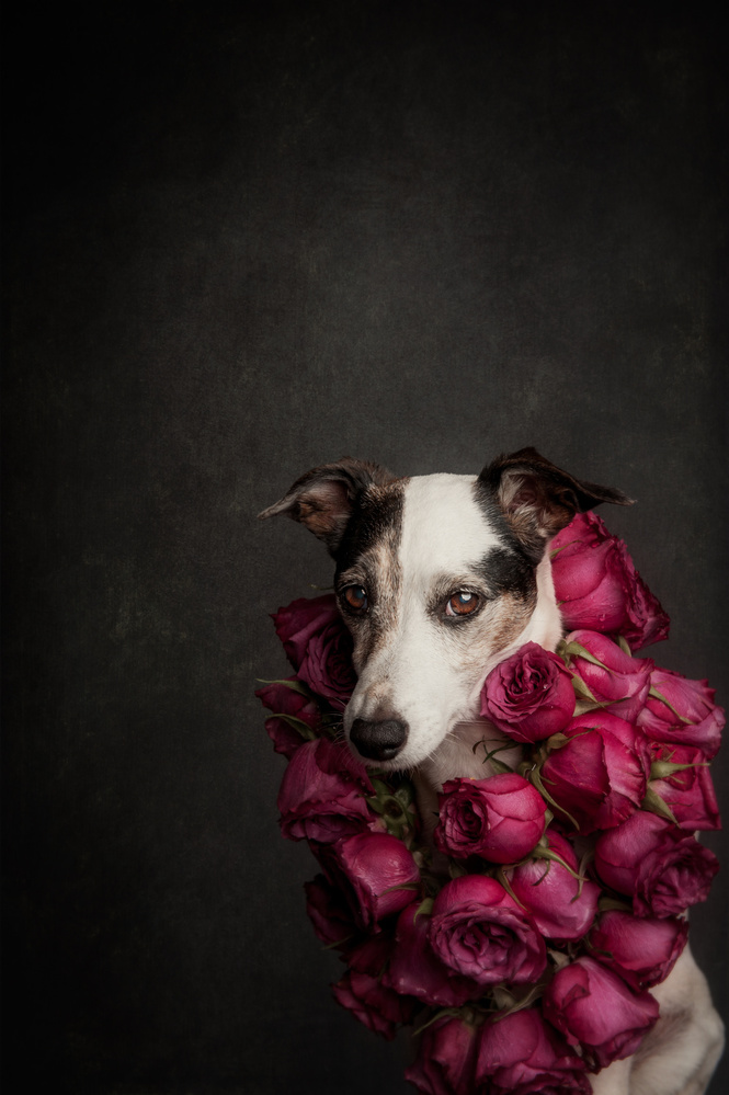 A piece of fine art art photography titled Rose Queen II by Heike Willers